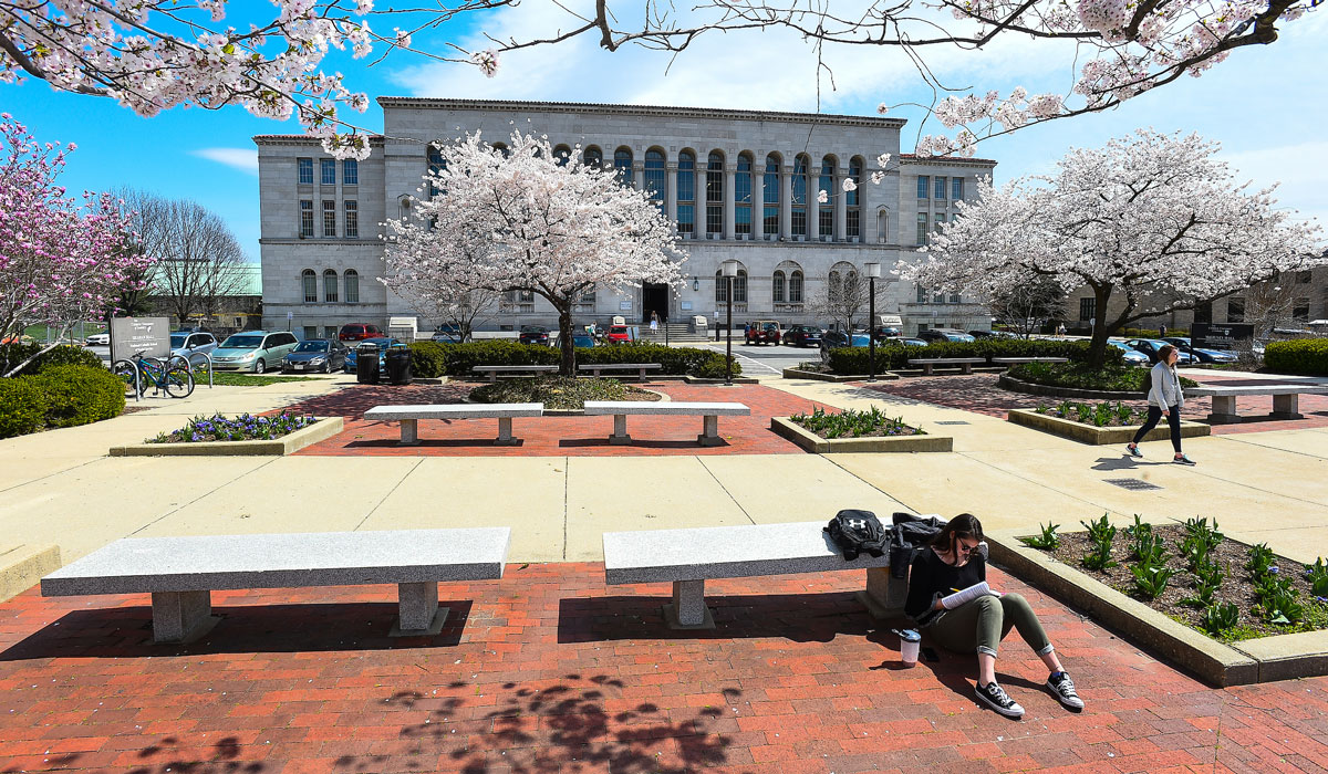 Student sitting under cherry blossoms