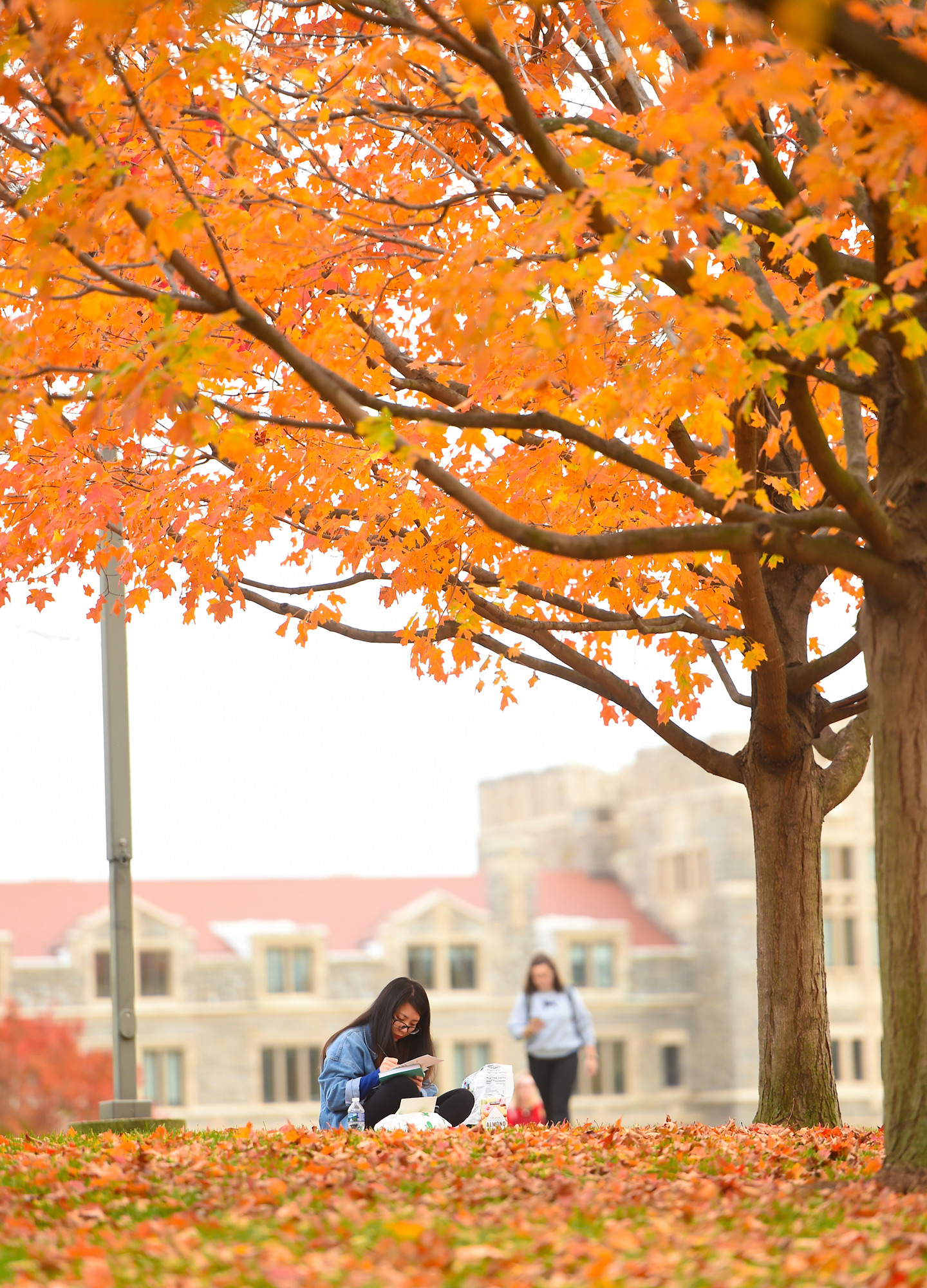Student studying under a tree in fall