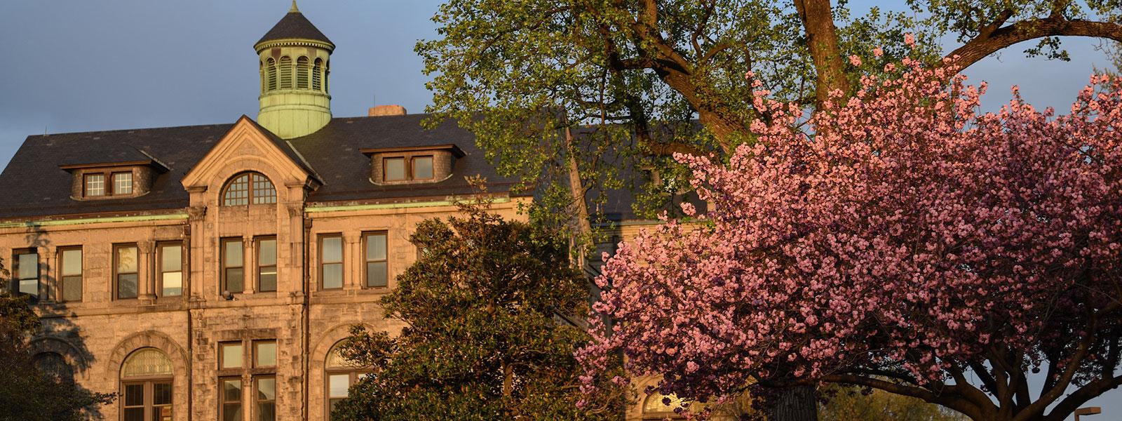 McMahon Hall and cherry blossom tree