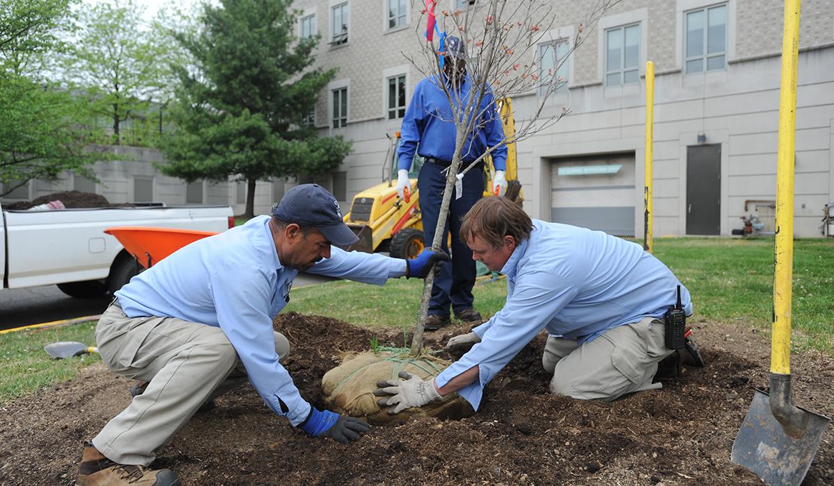 Trees are planted on Catholic University's campus